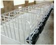 德州生产加工母猪定位栏厂家价格低图片