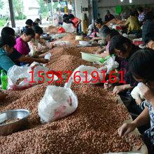 2017河南花生米价格图片