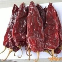 内蒙古出售干红辣椒