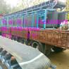 供应DY张家港大倾角可移动皮带输送机
