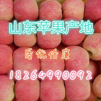 山东红富士苹果市场最新批发价格