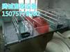 腾诚经济型母猪产床直销厂家母猪产床价格低质量好养猪设备厂家