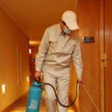 最平价番禺防鼠灭鼠专家白蚁防治除四害消杀服务公司
