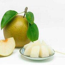 优质晚秋黄梨,大量供应,加V信:klbbhhh图片