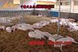 金寶貝干撒式發酵床