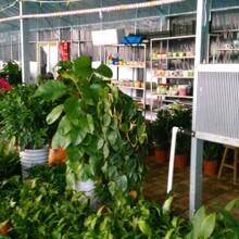 電加熱養殖取暖設備電取暖養殖環保升溫鍋爐圖片