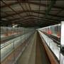 新旺兴农种植大棚骨架8122热镀锌钢架大棚生产图片
