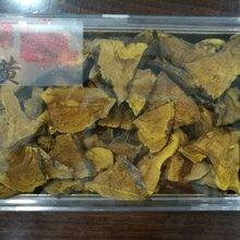 野生桑黄哪里的最好桑黄多少钱一斤