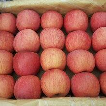 陕西冷库水晶红富士苹果产地价格合理图片
