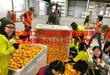 发达国家急招技术工工厂普工出国打工年薪高