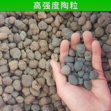 亳州頁巖陶粒廠家直銷圖片