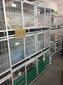 深圳哪里有卖美短价格多少深圳卖宠物猫的地方嘉恩猫舍图片