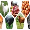 郑州提供有机蔬菜配送团购有机蔬菜定制有机蔬菜配送