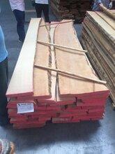 供應進口板材櫸木紅橡白橡圖片