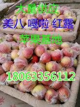 山東美八蘋果直銷價格美八嘎啦蘋果價格分析圖片