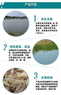 鱼塘起锈水怎么处理?水质有问题鱼塘水发黄浑浊怎么办?图片4