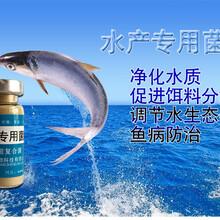 海參養殖em菌益富源水產em菌種價格圖片圖片