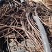 邯鄲廢舊電纜回收邯鄲廢銅電纜回收