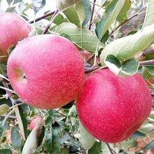 云南花果涧高原红野苹果样子虽丑,但味道甘甜,酥脆多汁图片