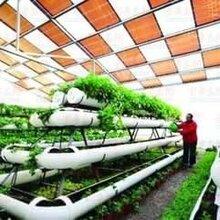 供应山东德州玻璃温室建设河北衡水花卉智能温室造价
