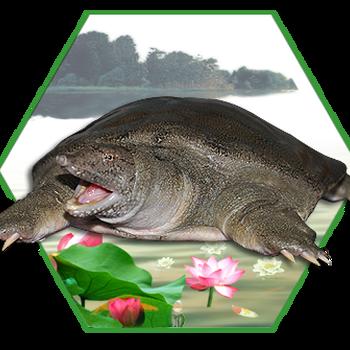 湖南甲鱼养殖基地有哪些,湖南养殖基地表