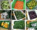 厚街蔬菜配送,食堂承包公司