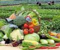 永隆蔬菜配送,食堂承包
