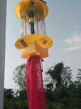 太阳能杀虫灯频振式果园杀虫灯图片