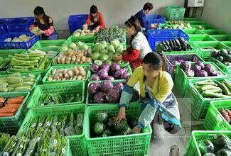 成都温江新鲜蔬菜配送食堂承包