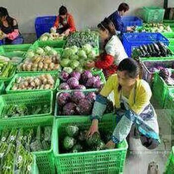 四川绵阳蔬菜配送公司