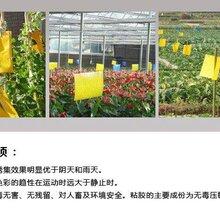 鹤壁人元生产的诱虫板粘虫板受到广大客户欢迎的原因图片