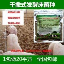 沈阳哪里有卖养猪发酵床菌种图片