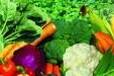 南头蔬菜配送食堂承包