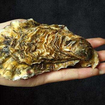 六盘水牡蛎批发公司-生蚝多少钱一斤