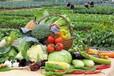 沙田蔬菜配送,食堂承包