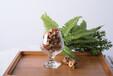 綠葉對根的情意人們對小米堅果的愛意