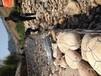 石笼网格宾网,雷诺护垫,铅丝石笼,石笼网厂