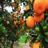 上海长兴岛郊野公园团建采摘橘子拓展一日、二日活动