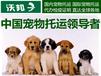 上海寵物托運價格多少錢寵物物流價格表