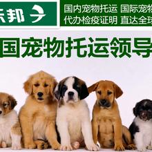 上海宠物托运价格多少钱宠物物流价格表图片
