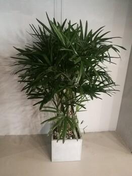 北京石景山绿植销售公司