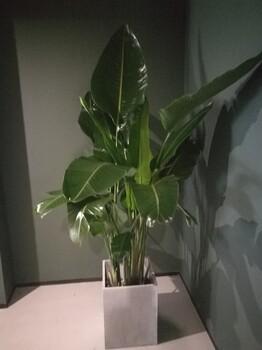 北京花卉租赁