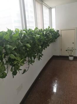 北京石景山绿植租赁