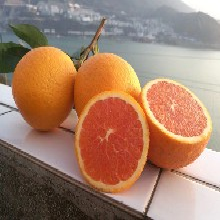 秭归脐橙生态原产地