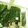 仿真植物墙