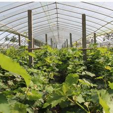 蔬菜防蟲網,綠色蔬菜防蟲網,小青菜防蟲網,蔬菜拱棚
