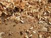 白蚁强大的穿掘能力-深圳市白蚁防治中心
