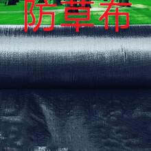 天津蓝莓防草布联系方式,除草布图片