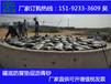 山西忻州冷补沥青砂防腐垫层省工序提效率