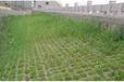 广西南宁春季播种的边坡绿化草籽草种品种?#24515;?#20123;